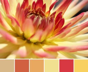 Warm Dahlia Palette