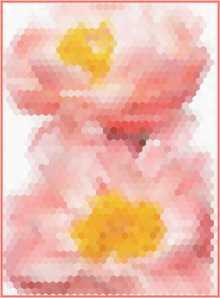 April 13-Hexie flowers